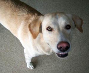 Dog Aspen